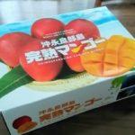 沖永良部島のマンゴーが、子供が「一生の思い出」と言うほど美味しかった!!